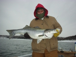 Winter striped bass on Norfork Lake